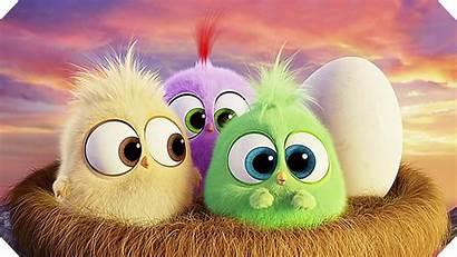Angry Birds Wallpapers Pc 4k Desktop Hatchlings