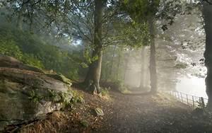 Fog mist nature landscapes trees forest woods leaves fence ...