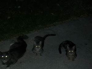 2 Reasons Cats' Eyes Glow in the Dark