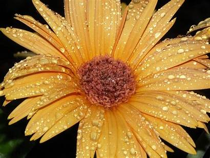 Yellow Flower Flowers Wallpapers Background Nice Plant