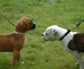 With how to introduce an aggressive dog to another dog
