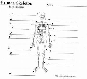 Human Skeleton Diagram With Labels   Human Skeleton