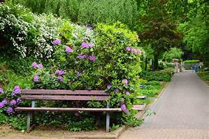 Free picture: bench, lilac, shrub, tree, flower, park