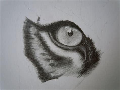 julianes art blog tigerzeichnung