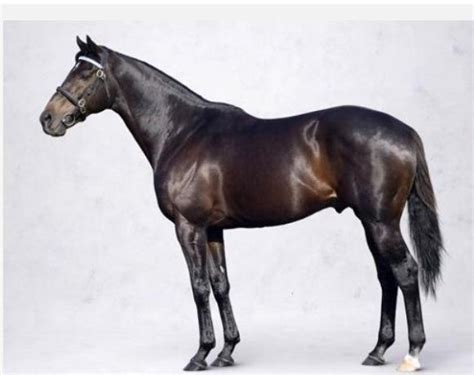 expensive most thoroughbred horses horse ponies animal shareef dancer