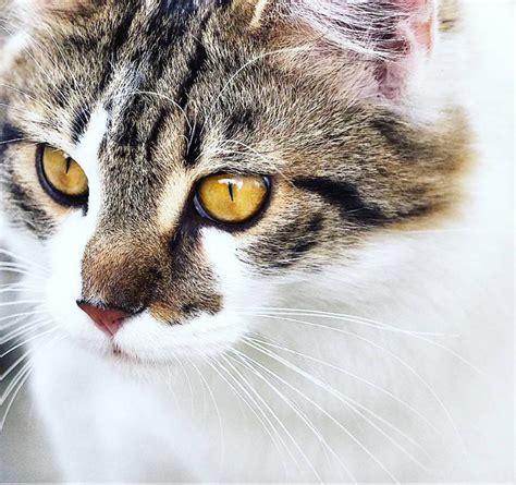rein getigert ein videoblog rund um katzenhaltung