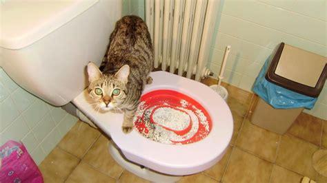 avis sur litter kwitter kit liti 232 re pour entra 238 ner votre chat 224 se servir de vos toilettes