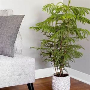 17, Best, Large, And, Tall, Indoor, Plants, For, Home, U0026, Offices