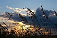 Western Prairie Landscape