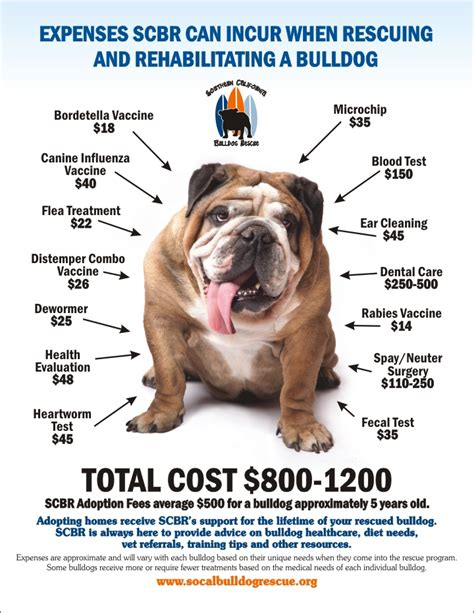 About Adopting  Southern California Bulldog Rescue. Salt Lake Community College Nursing Program. Northeast Atlanta Health And Rehabilitation Center. Food For Thought Catering Garage Door Factory. Free Checking Account No Opening Deposit. Scrum Project Management Methodology. Driving Insurance Quote Comcast Online Backup. Design Newsletter Templates What Is Kanban. Sagepay Merchant Account Midrin For Headaches