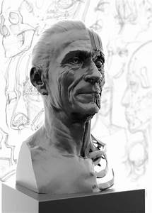 Portrait Side Of The Ecorche Study  Relates The Underlying Facial Anatomy To The Surface Forms