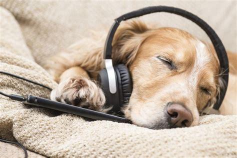 secret  calming   dog