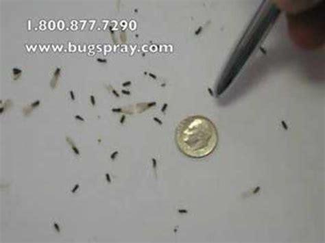 termite swarmers youtube