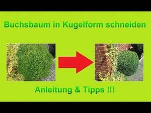 Buchsbaum Schablone Kaufen : buchsbaum kugel von freier hand schneiden buchs busch ~ Watch28wear.com Haus und Dekorationen