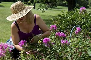 Hortensien Vermehren Wasserglas : hortensien vermehren zwei methoden detailliert erkl rt ~ Lizthompson.info Haus und Dekorationen