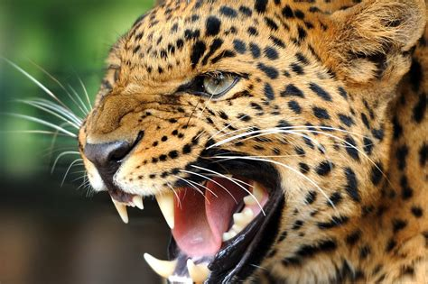 49+ Animal wallpapers ·① Download free amazing HD