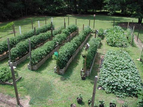 25 trending vegetable garden layouts ideas on