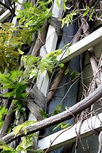 Rankgerüst Für Blauregen : in eigener sache fassadenbegr nung mit kletterpflanzen ~ A.2002-acura-tl-radio.info Haus und Dekorationen