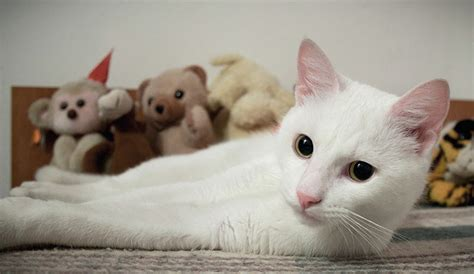 white cat names cute white cats www pixshark com images galleries with a bite