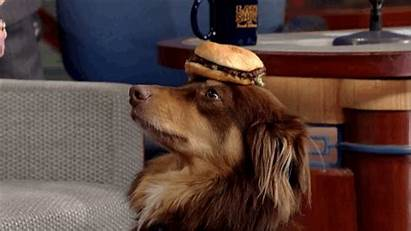 Dog Dogs Amanda Seyfried Eating Burger Night