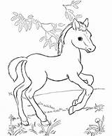 Horse Coloring Pages Horses Colouring Printable Foal Animals Pony Foals Animal Wild Ponies Colt sketch template
