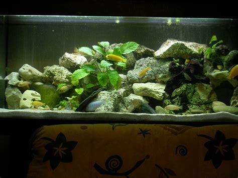aquarium 400 l pour du malawi plein de micro bulles help page 2
