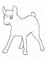 Coloring Lamb Sheep sketch template