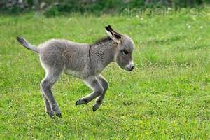 Image result for donkey galloping