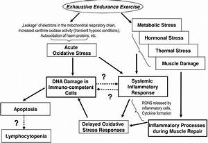 Proposed Model Of Exercise
