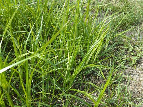 Seeds Property Management Garden Tips