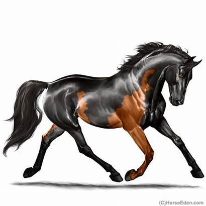 Horse Chimera Eden Spp Colt Warmblood Gelding