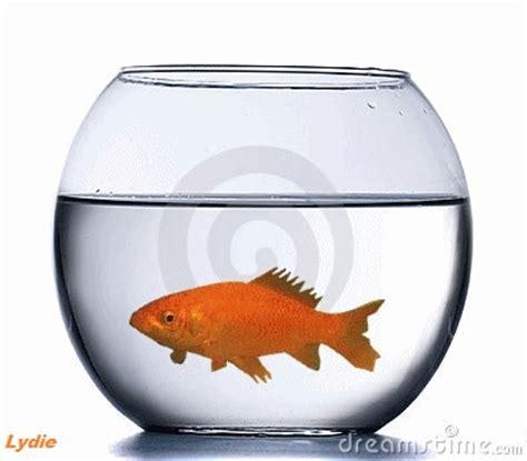 comme un poisson dans l eau aquarium rond
