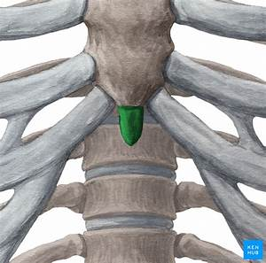 Sternum  U2022 Anatomy  Parts  Pain And Clinical Correlation