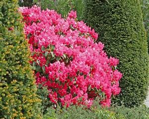 Quand Planter Lavande Dans Jardin : conseils pour bien choisir ses plantes tendances d co d co ~ Dode.kayakingforconservation.com Idées de Décoration