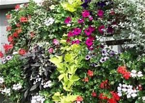 Sommerblumen Für Schatten : s kartoffel ipomoea batatans eine strukturpflanze ~ Michelbontemps.com Haus und Dekorationen