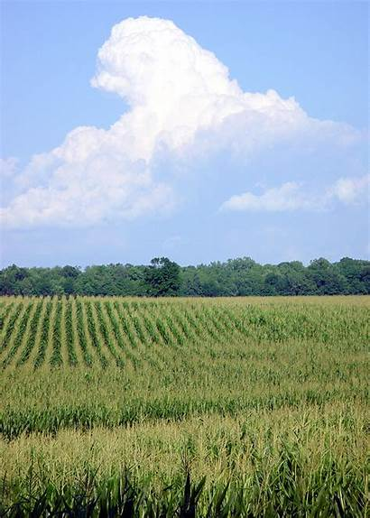 Michigan Cornfield Farmland Pioneer Lagging Despite Economy