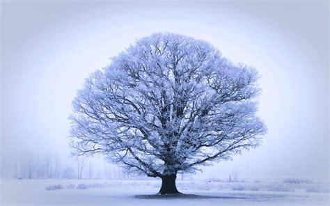 17 Wonderful Hd Oak Tree Wallpapers Hdwallsourcecom