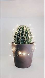 pin by pujihartatik on plants plant aesthetic trendy