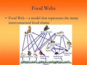 Ppt - Principles Of Ecology Powerpoint Presentation