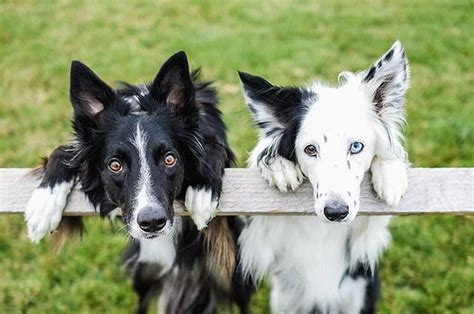 smartest dogs the top 10 smartest dog breeds in the world may surprise you