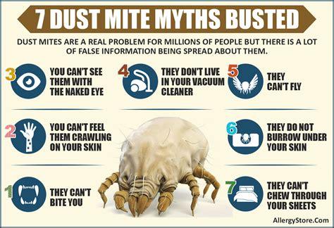 dust mite information   enemy