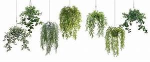 Künstliche Pflanzen Wie Echt : kunstpflanzen kunstgr ser k nstliche orchideen ~ Michelbontemps.com Haus und Dekorationen