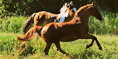 breeds horse fast fastest inbox newsletter every week
