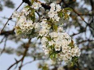 Rosa Blühender Baum Im Frühling : bl tenb ume ~ Lizthompson.info Haus und Dekorationen