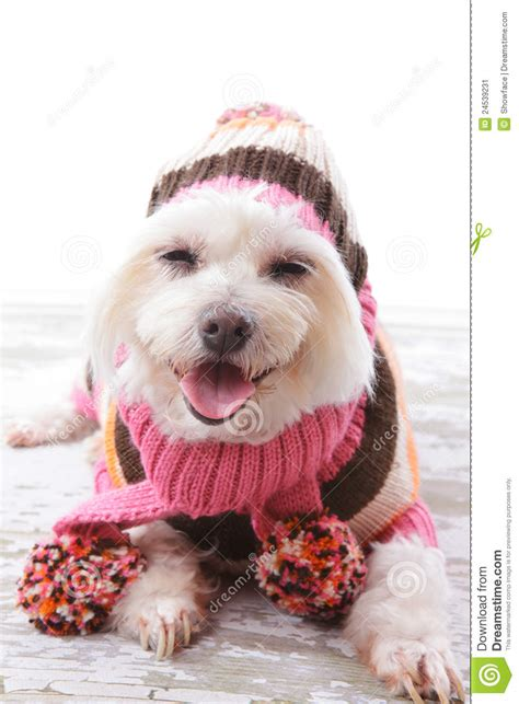 matching knit beanie happy in warm woollen sweater and scarf stock image