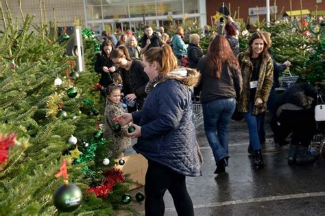 morrisons fake christmas trees where can i buy real and artificial trees in manchester on national tree day