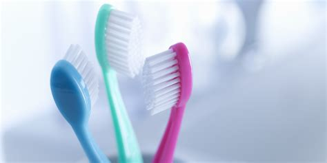 toilet brush tooth brush mouth the disgusting truth about your toothbrush huffpost