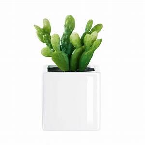 Mini Succulente Pas Cher : 10 objets pas chers pour relooker son kot page 9 sur 9 ~ Teatrodelosmanantiales.com Idées de Décoration