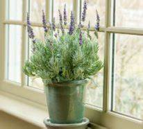Lavendel Pflanzen Im Topf : 1001 ideen f r garten pflanzen gartengestaltung ~ Michelbontemps.com Haus und Dekorationen