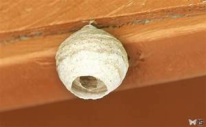 Nid De Guepe Dans Le Sol : intra science construction d 39 un nid de gu pes ~ Dailycaller-alerts.com Idées de Décoration